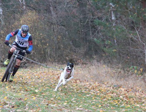 Die Österreichischen Meister 2018 in Canicross und Bikejöring
